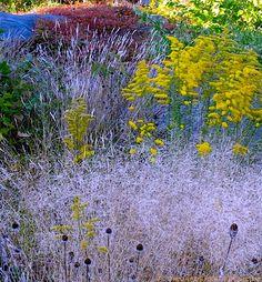 Tufted Hair Grass (Deschampsia flexuosa), Goldenrod (Solidago), Rudbeckia hirta seed pods, and red Virginia creeper (Parthenocissus quinquefolia)