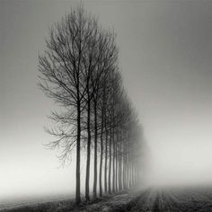 Tree-Photography-Pierre-Pellegrini-3
