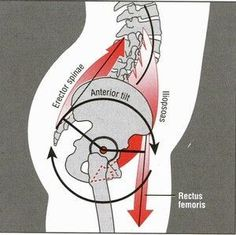 Cause of lower belly pooch is tight hip flexors. The muscles that cross the front of your hips can get really tight and pull you into what we exercise science types call an anterior pelvic tilt. This forward tilt pulls your low back out of alignment. Fitness Workouts, Sport Fitness, Fitness Tips, Fitness Motivation, Health Fitness, Fat Workout, Boxing Workout, Workout Plans, Health Diet
