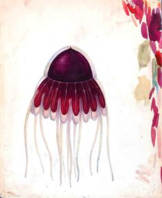 Free Printable - Animal - Fish - Jellyfish, dark red
