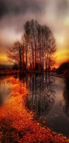 You really need to enlarge this photo to see all the details... a footbridge, mountains in the background, red autumn leaves floating toward the camera in the lake as the sunset streams light through wintry barren trees to reflect the island onto the water. -DdO:)