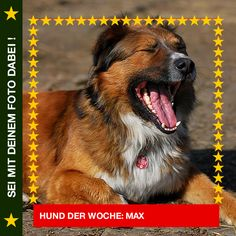 Harzer Fuchsmix Max Max beim Chillen in der Sonne ☀ #Hund: Max / #Rasse: Harzer Fuchsmix      Mehr Fotos: https://magazin.dogs-2-love.com/hund-der-woche/harzer-fuchsmix-max/ Foto, Hund
