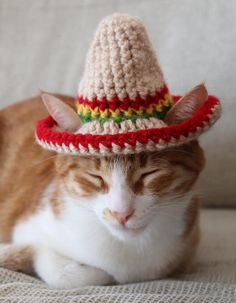 Cat Sombrero Sombrero for Cats Sombrero Hat with Ear Holes Kim Miller, Taco Cat, Small Dog Breeds, Small Dogs, Photo Prop, Easy Crochet Patterns, Crochet Ideas, Knitting Patterns, Miniature Dogs