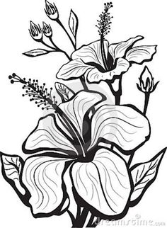 455 Best Drawing Flowers Images Flower Designs Drawing Flowers