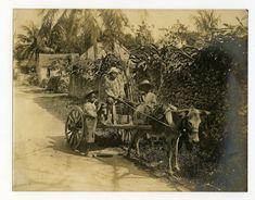 To Market, Nassau, Bahamas | Item: Title: To Market, Nassau,… | Flickr