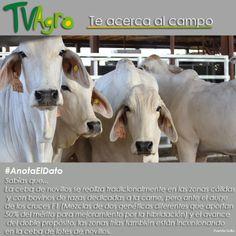 #AnotaElDato  Otras alternativas para la ceba de ganado.
