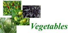 Vegetable Gardening Tips and Tricks that can be helpful in Colorado and everywhere else.