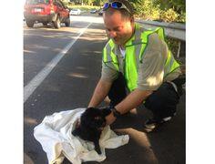 Paramedics Rescue Dog Hit By Several Cars | LEX18.com | Lexington, Kentucky
