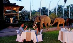 The Elephant Safari Park Lodge, in Taro, Bali, is home to 30 endangered Sumatran elephants - enough for your own personal chauffeur to breakfast..