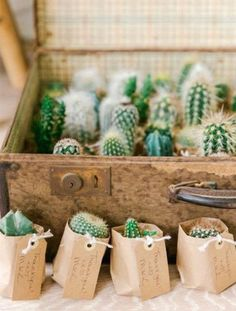 Wedding Gifts mini cactus wedding favors - This next wedding couple from Amsterdam will put a little pep in your step when it comes to the idea of true love. You honestly wont be able to keep from smiling after seeing this wedding. Wedding Favors And Gifts, Wedding Keepsake Ideas For Guests, Plant Wedding Favors, Cactus Wedding, Garden Party Wedding, Wedding Keepsakes, Wedding Ideas, Party Favors, Wedding Giveaways For Guests