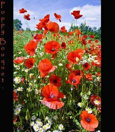 Poppy Bouquet. | Flickr - Photo Sharing!