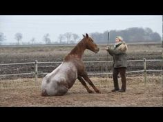 "Liberty Horse Training & Play (Plays perfectly to ""Brave"" by Josh Groban!)"