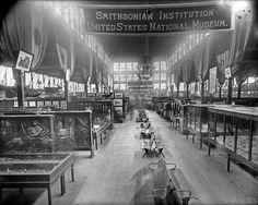 Smithsonian Exhibit at the 1888 Cincinnati, Ohio, Exposition