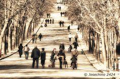Paseo del retiro- Madrid
