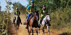 Haras national d'Uzès : le grand spectacle de l'endurance durant 4 jours. 9-12 octobre 2014
