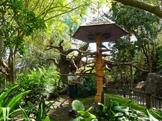 Disney on Wheels: Wednesday in the World - Discovery Island Trails