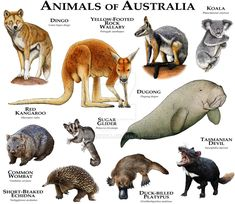 Animals of Australia by rogerdhall.deviantart.com on @DeviantArt
