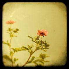 """""""Miss Willmott"""" by Alicia Bock #ttv"""