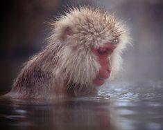 the work of Kyoto-based Kiyoshi Ookawa who has been capturing these wonderfully intimate portraits of snow monkeys.