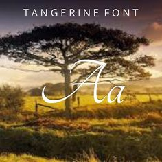 #calligraphy #fonts #download - Tangerine Font  by Toshi Omagari: Tangerine is created by Toshi Omagari and, says the author, 'is trying to create a free alternative to the established fonts from the Calligraphy fonts category'. You can use it for both personal and commercial projects. #font #typography #design #inspiration via @thefontex