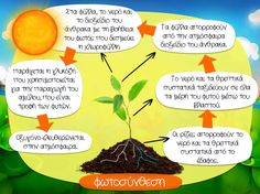 Φωτοσύνθεση Space Solar System, Greek Language, Plant Science, Water Cycle, Environmental Education, Teaching Methods, Earth Day, Cyprus, School Projects