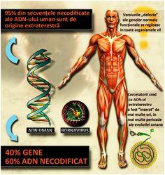 OPINII PERSONALE: ADN-ul uman... conţine gene extraterestre ?!? Un punct de vedere... interesant!