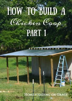 building your own chicken coop