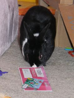Some #bunny won!