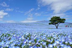 Ibaraki, Japan  http://bit.ly/2b82Or6