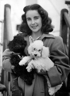 Liz Taylor and her poodles a girls best friends