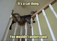 It's a cat thing...you wouldn't understand. :)