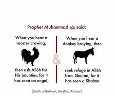 Bukhari, Muslim & Ahmad, really? Islamic Quotes, Quran Quotes Inspirational, Islamic Teachings, Islamic Messages, Muslim Quotes, Religious Quotes, Inspiring Quotes, Islam Hadith, Prophets In Islam