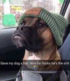 Funny Dog Fails, Funny Dog Memes, Funny Animal Memes, Funny Animal Pictures, Cute Funny Animals, Cute Baby Animals, Funny Images, Funny Dogs, Funny Quotes