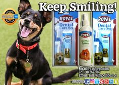 A dog smile run from the depth of his eyes and tips of his tails. Worry no more! Good Idea provides dental kit for your pawsome buddies! For affordable prices . For more information : Call : 042677789 Email : sales7@goodidea.ae Available in : SOUQ.COM and in selected Pet Store near you.  #Dogs #DogsinDubai #DubaiDogOwner #PetDog #DogLovers #DentalKit #DentalBrush