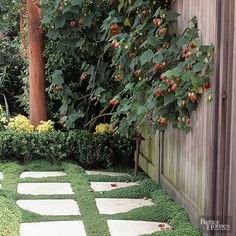 Most people think of baby tears as a houseplant or terrarium plant, but in warm, humid regions, baby tears makes a lovely bright green groundcover that works well in vertical gardens, containers, or protected pathways. It's a tender plant that does best in a shady spot with moist, fertile soil. When happy, baby tears spreads rapidly, forming a mosslike cushion. It can't tolerate foot traffic
