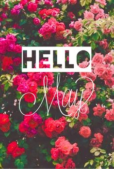 80 Hello May Quotes And Sayings To Bring In The Wonderful, colorful and warm month. Enjoy these quotes for a new month and love another great may! May Days, Days And Months, Months In A Year, Seasons Months, 12 Months, Spring Months, Spring Time, Hello May Quotes, Cute Wallpapers