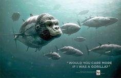 Publicidad de WWF :: Fondo Mundial para la Naturaleza #mono #peces #mar