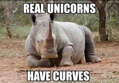 Unicorns exist. They are grey or black and are called Rhinos!