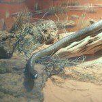 I serpenti possiedono un fascino tutto loro ma risultano essere anche molto pericolosi tanto da meritarsi un primato: quello che li colloca al primo posto a livello mondiale come animali che
