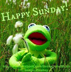 Happy Sunday! via www.Facebook/BedeempledBrain