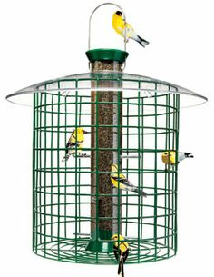 About Squirrel Proof Bird Feeders