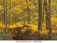 Magic autumn wood, yellow. Unusual mystical nature. Young foliage and grass. Photo wall-paper, card