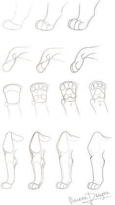 animal sketches First part: Another tutorial: Art Drawings Sketches, Animal Sketches, Cute Drawings, Animal Drawings, Cat Drawing Tutorial, Sketches Tutorial, Eye Tutorial, Warrior Cat Drawings, Warrior Cats Art