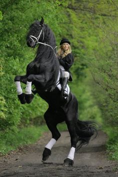 #Friesian horse rearing.  i used to ride a pinto that would rear only on command...awesome