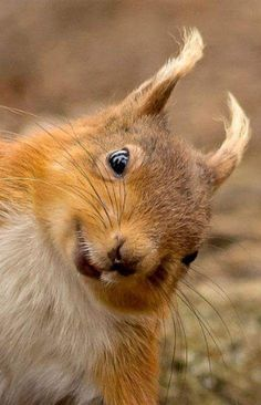 """""""Got any spare nuts?!"""""""