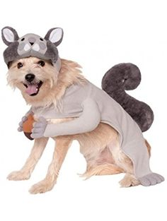 Rubies Costume Company Squirrel Pet Costume, X-Large ❤ Rubies Costume Company