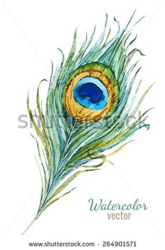 peacock drawing with colour - Google Search