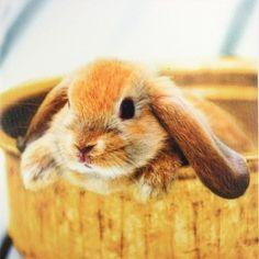 Bunny lapinou. Tableau de décoration pour Pâques sur le thème des lapins.