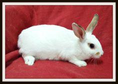 Columbia #rabbit #rescue #bunnies #gville