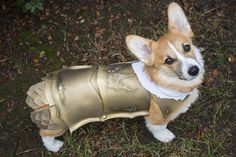 [NO SPOILERS] I made my puppy Kingsguard armor for Halloween : gameofthrones